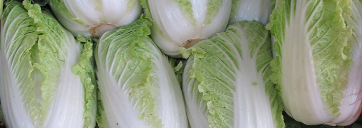 Napa Cabbage by Early Morning Farm CSA