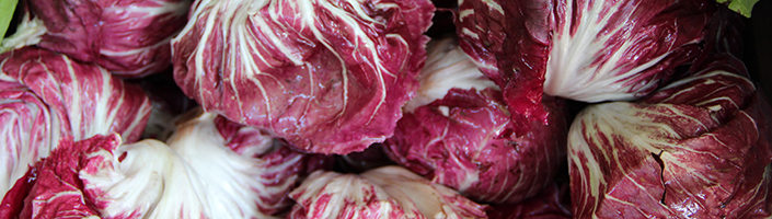Radicchio by Early Morning Farm CSA
