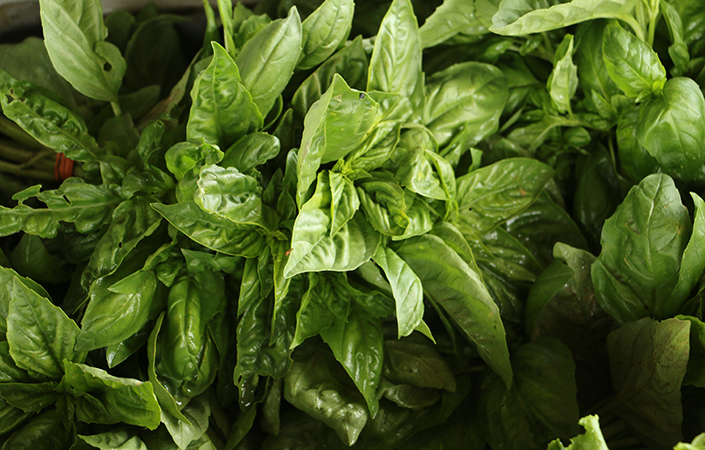 10 Ideas for Basil