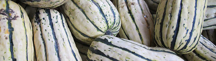 Delicata Squash by Early Morning Farm CSA