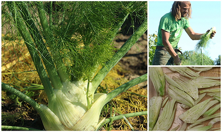 howtousefennel