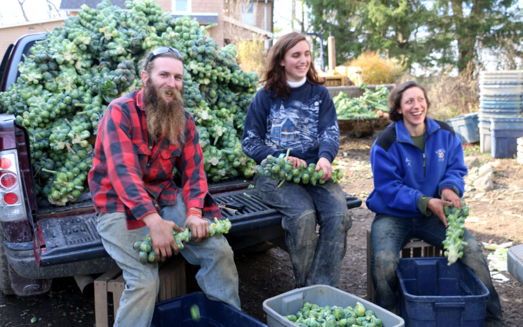 Ithaca CSA Shares @ Greenstar Co-op!