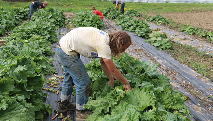 Lansing Area CSA Share Pick-up Sites